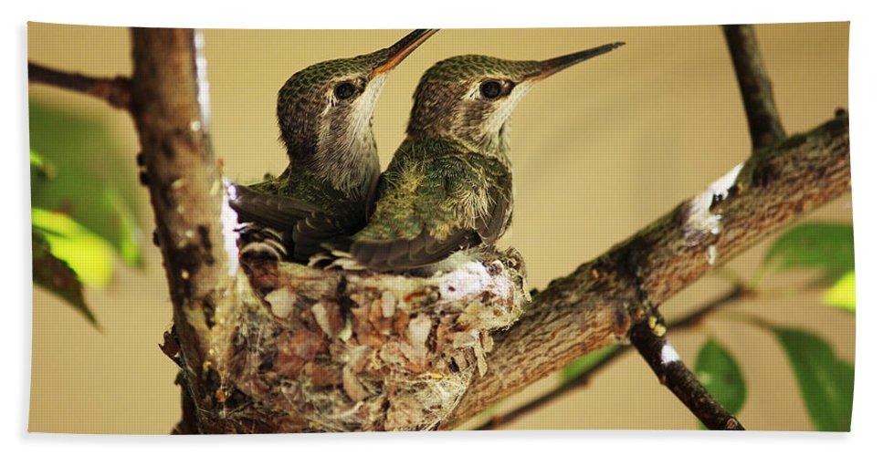 Hummingbirds Bath Sheet featuring the photograph Two Hummingbird Babies In A Nest by Xueling Zou