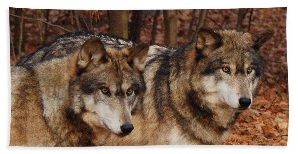 Wolf Hand Towel featuring the photograph Two Of A Kind by Lori Tambakis