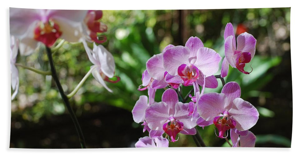 Orchid Bath Sheet featuring the photograph Two Orchid Branches Number One by Heather Kirk