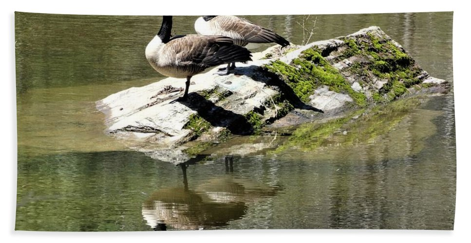 Canada Geese Vermont Hand Towel featuring the photograph Two Plus Two by Karen Velsor