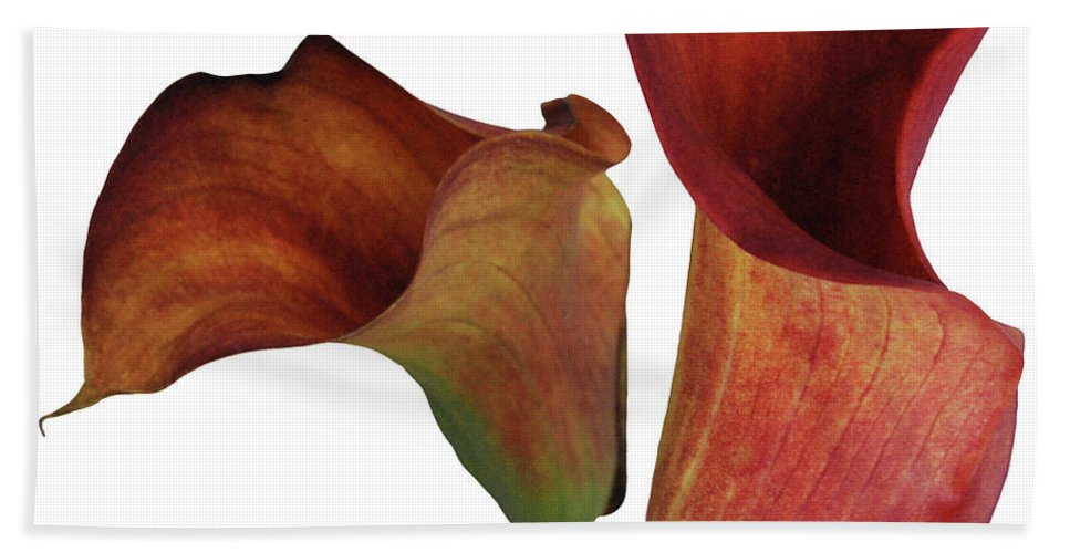 Rust Hand Towel featuring the photograph Two Rust Calla Lilies Square by Heather Kirk