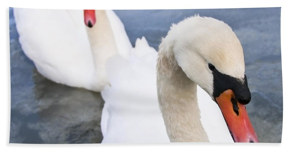 Swan Hand Towel featuring the photograph Two Swans by Svetlana Sewell