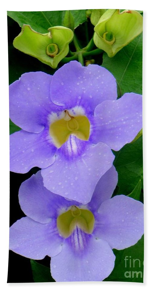 Thunbergia Bath Sheet featuring the photograph Two Thunbergia With Dew Drops by Mary Deal