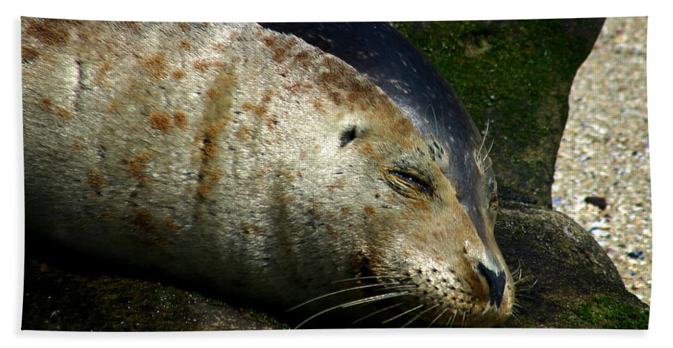 Seal Bath Towel featuring the photograph Two Tone Seal by Anthony Jones