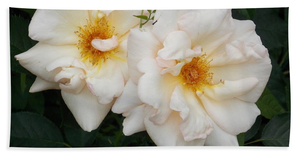 White Flowers Hand Towel featuring the photograph Two White Flowers by Catherine Gagne