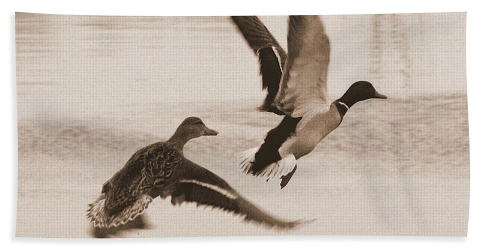 Ducks Hand Towel featuring the photograph Two Winter Ducks In Flight by Carol Groenen