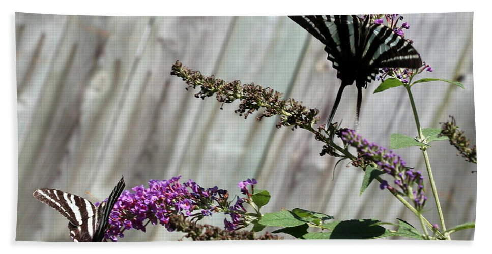 Two Zebra Swallowtail Butterflies Hand Towel featuring the photograph Two Zebra Swallowtail Butterflies by Shannon Louder