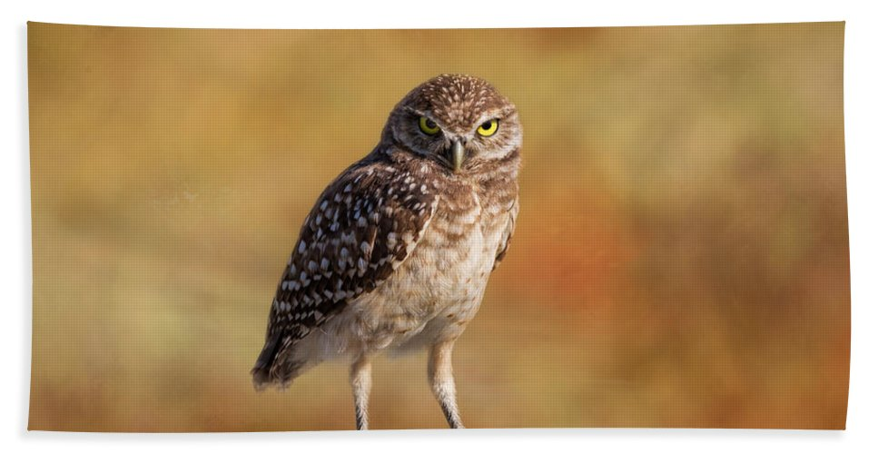 Owl Hand Towel featuring the photograph Under A Watchful Eye by Kim Hojnacki