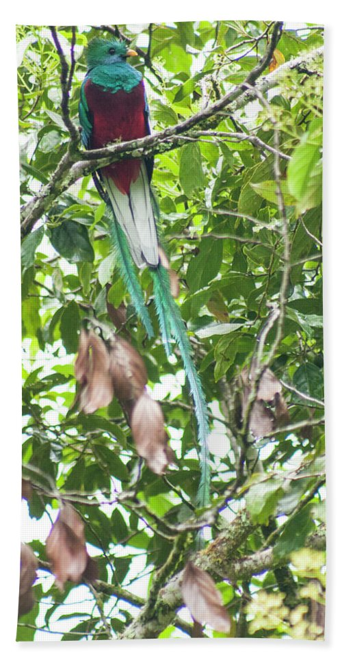 Resplendent Quetzal Hand Towel featuring the photograph Underskirt by Wes Hanson