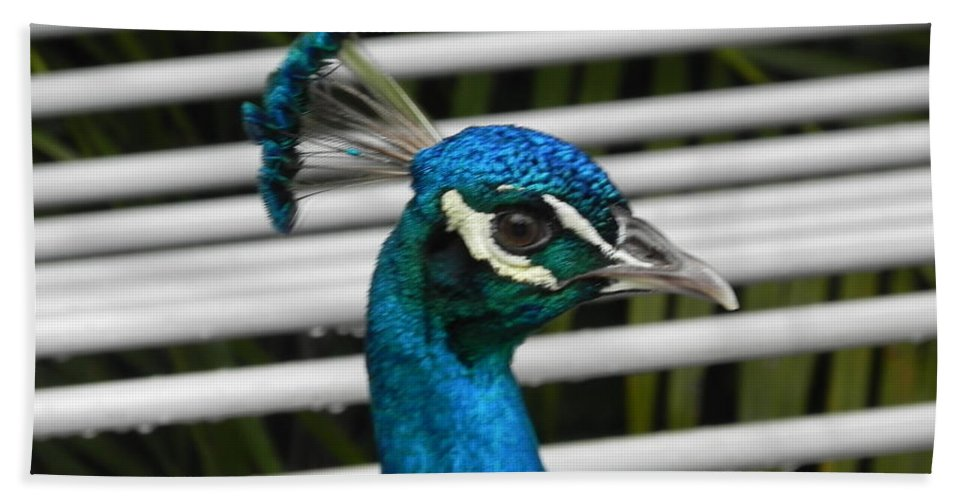 Photography Bath Sheet featuring the photograph Up Close Peacock by Chrisann Ellis