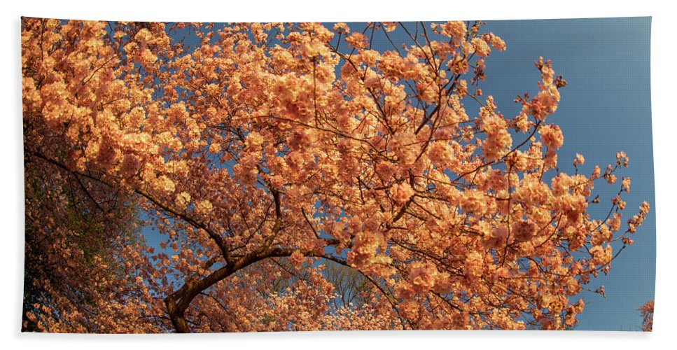 Cherry_blossom Hand Towel featuring the photograph Up To The Cherry Flowers by Jelieta Walinski