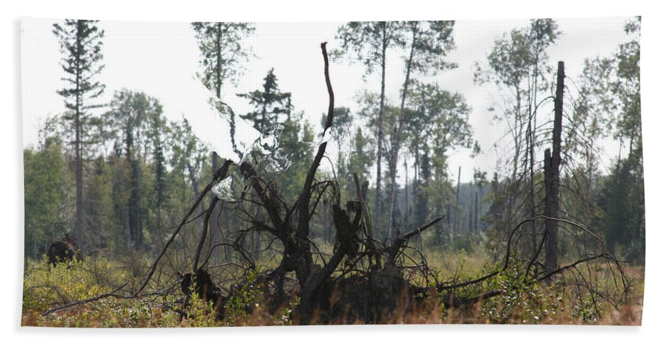 Roots Tree Stump Hawk Bird Wild Forest Nature Feeling Abstract Bath Sheet featuring the photograph Uprooted by Andrea Lawrence