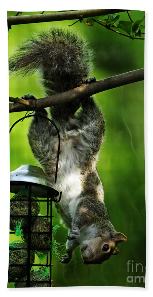 Squirrel Hand Towel featuring the photograph Upside Down by Angel Ciesniarska