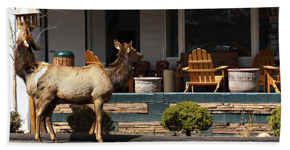 Elk Hand Towel featuring the photograph Urban Elk by Marilyn Hunt
