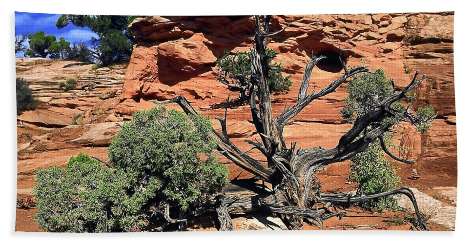 Utah Juniper Tree Hand Towel featuring the photograph Utah Juniper And Red Rock by Sally Weigand