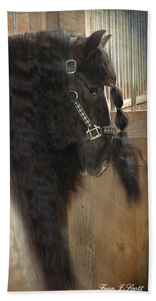 Horse Photographs Bath Sheet featuring the photograph Valentino's Mane by Fran J Scott
