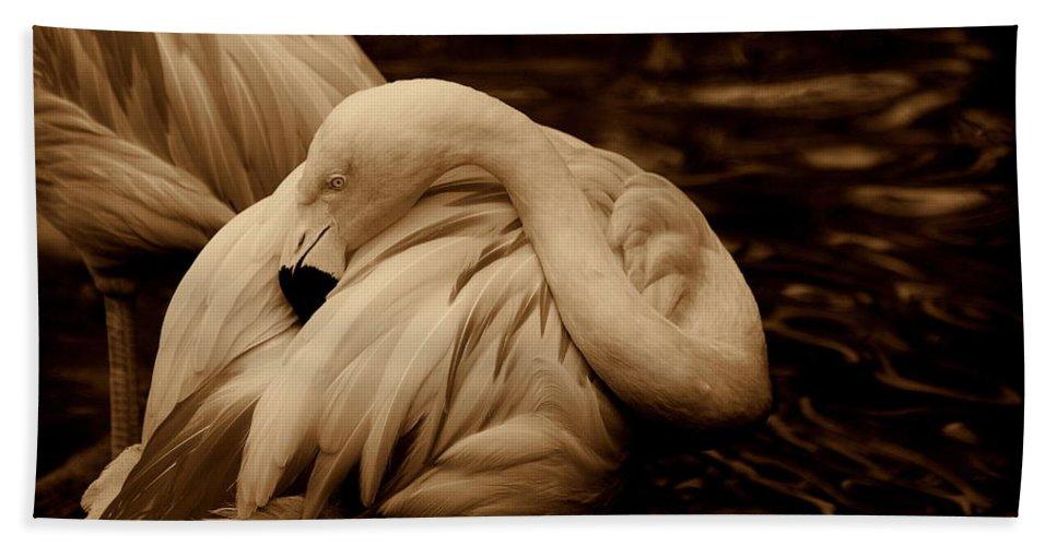Flamingo Bath Sheet featuring the photograph Vanity II by Susanne Van Hulst