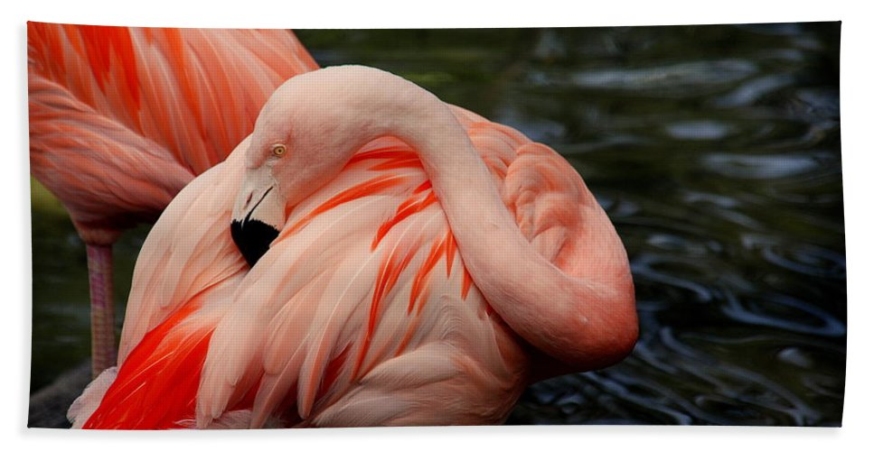 Flamingo Bath Sheet featuring the photograph Vanity by Susanne Van Hulst