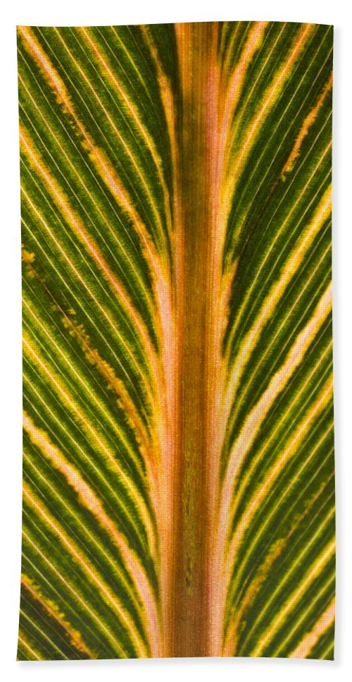 Macro Hand Towel featuring the photograph Variegated Banana Leaf by John Trax