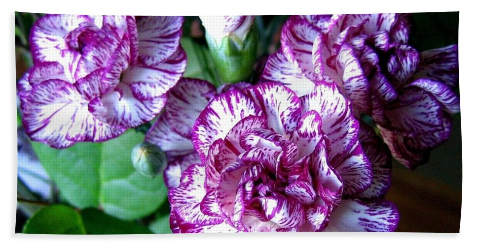 Carnations Hand Towel featuring the photograph Variegated Carnations by Will Borden