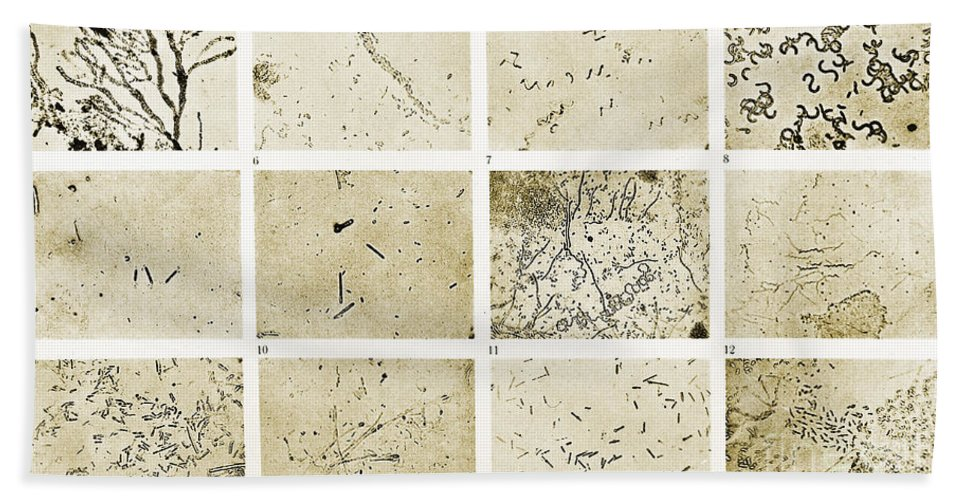 History Bath Sheet featuring the photograph Various Bacilli Observed By Robert Koch by Wellcome Images