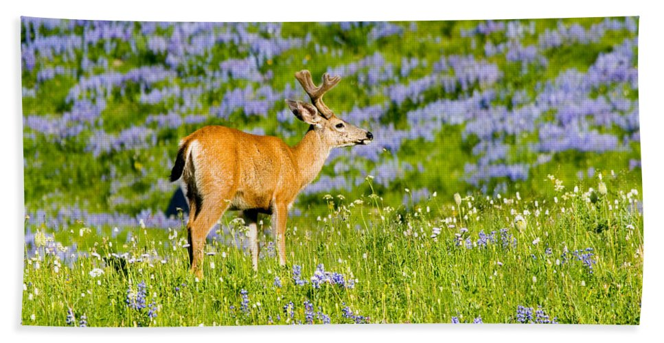 Deer Bath Towel featuring the photograph Velvet On Lupine by Mike Dawson