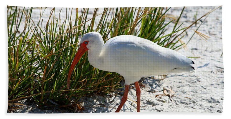 Bird Hand Towel featuring the photograph Venice Beach Ibis by Christiane Schulze Art And Photography