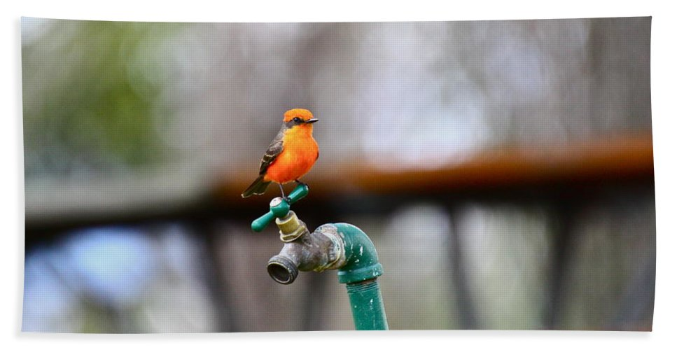 Birds Hand Towel featuring the photograph Vermilion Flycatcher Two by Diana Hatcher