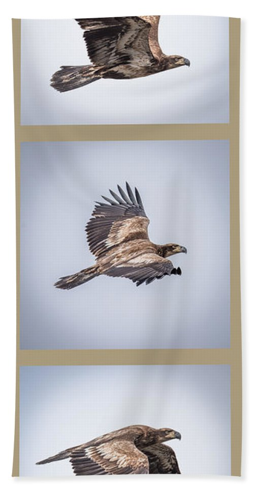Bald Eagle Hand Towel featuring the photograph Vertical Eagle Triptych by Paul Freidlund