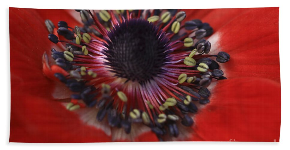 Flower Hand Towel featuring the photograph Vibrant Red by Deborah Benoit