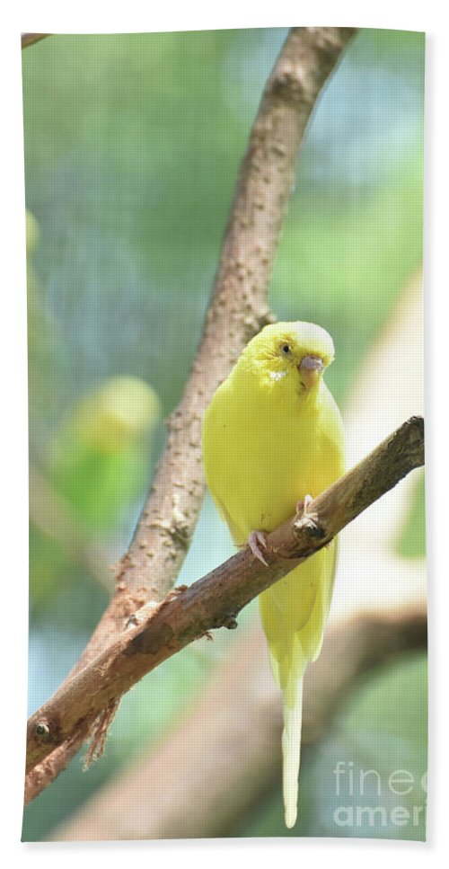 Budgie Hand Towel featuring the photograph Vibrant Yellow Budgie Parakeet In The Summer by DejaVu Designs