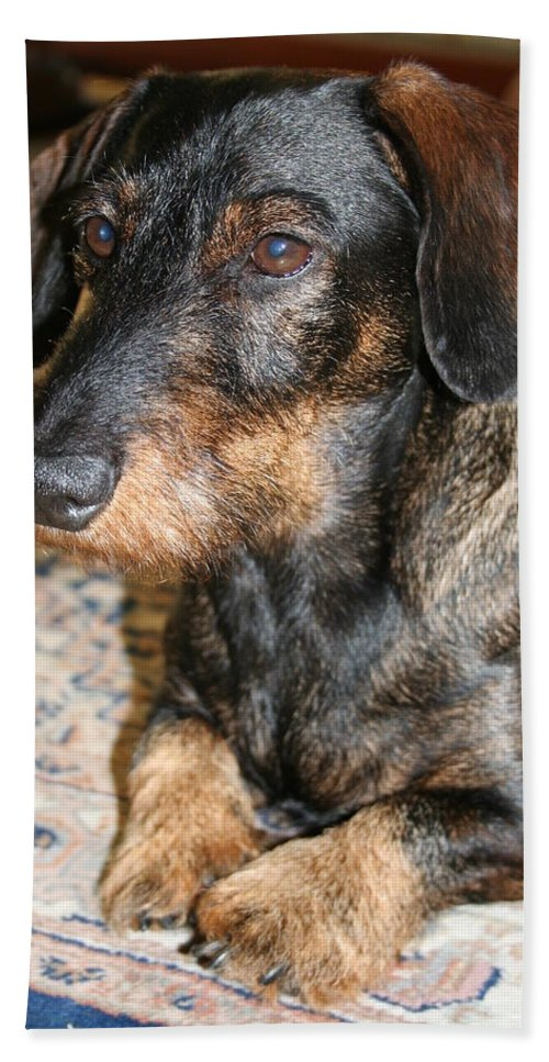 Dog Bath Sheet featuring the photograph Victor by Christiane Schulze Art And Photography