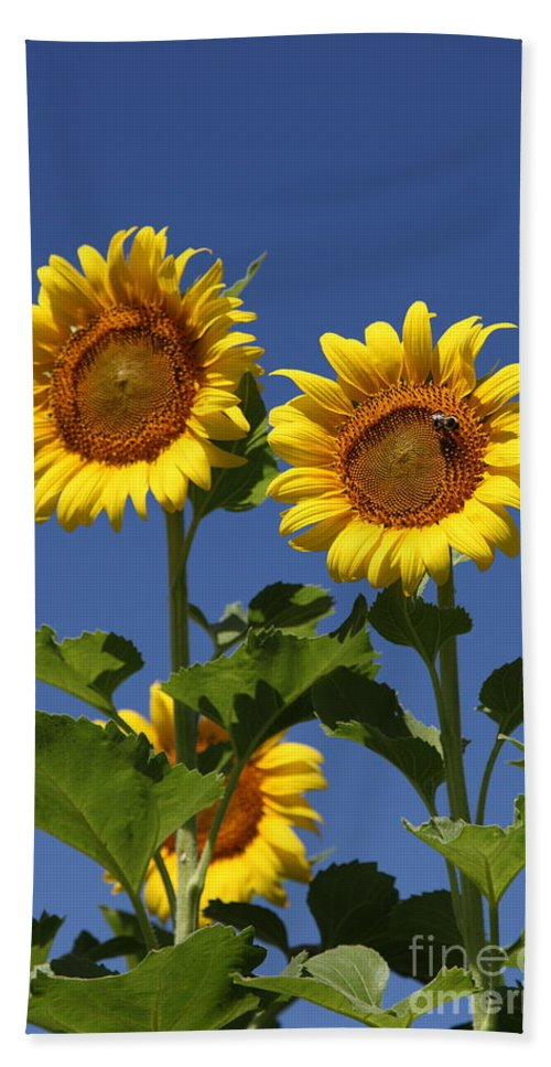 Sunflower Bath Towel featuring the photograph Viewing The Past by Amanda Barcon