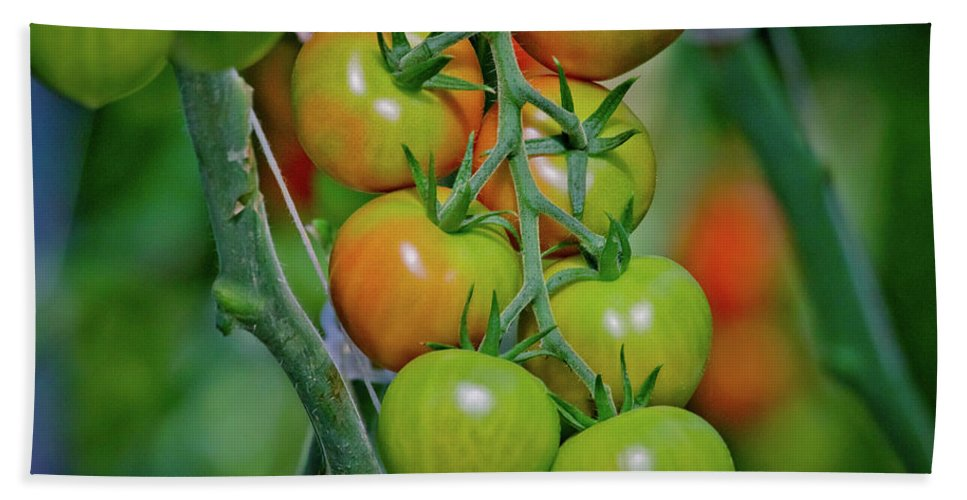 Tomatoes Bath Sheet featuring the photograph Vine Ripened Rainbows by Linda Unger