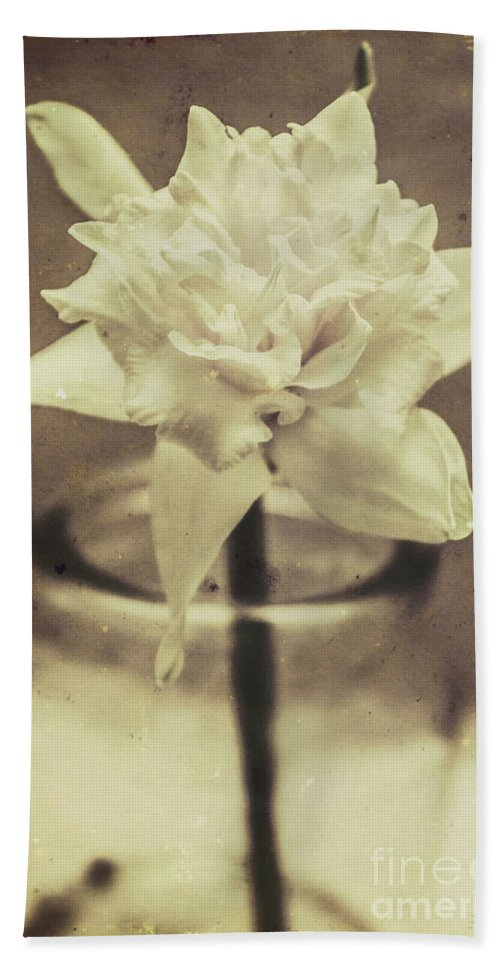 Antique Hand Towel featuring the photograph Vintage Floral Still Life Of A Pure White Bloom by Jorgo Photography - Wall Art Gallery