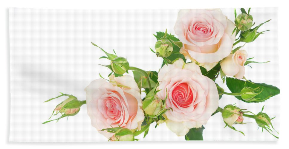 Rose Hand Towel featuring the photograph Garden Roses And Buds by Anastasy Yarmolovich