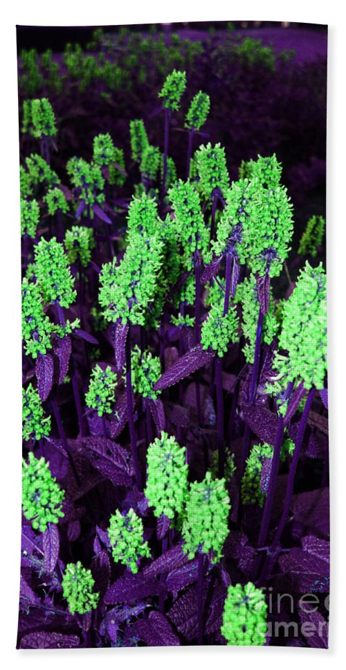 Hand Towel featuring the photograph Violet Dream On Green by Jamie Lynn