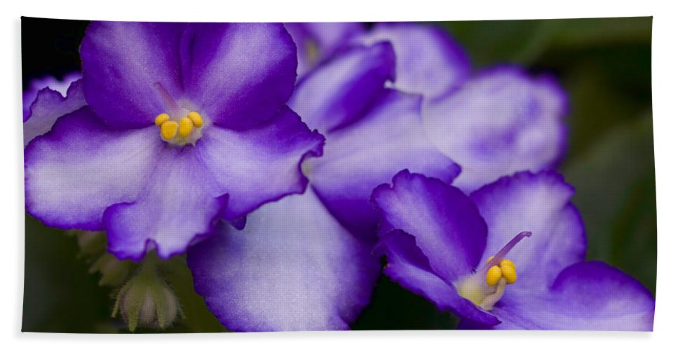 Violet Hand Towel featuring the photograph Violet Dreams by William Jobes