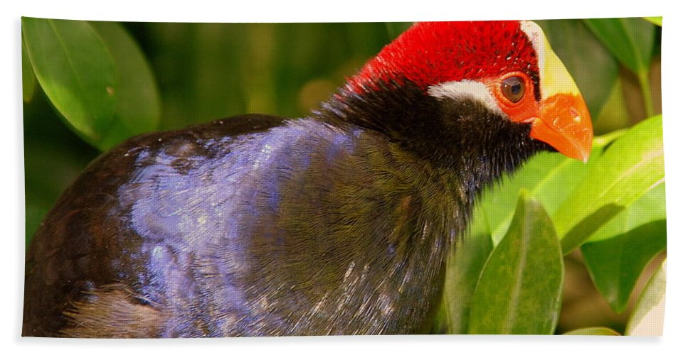 Violet Plantain Eater Bath Sheet featuring the photograph Violet Plantain Eater by Susanne Van Hulst