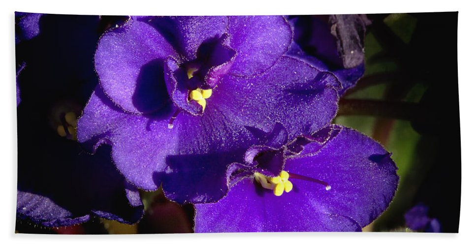 Flowers Hand Towel featuring the photograph Violets by Phyllis Denton