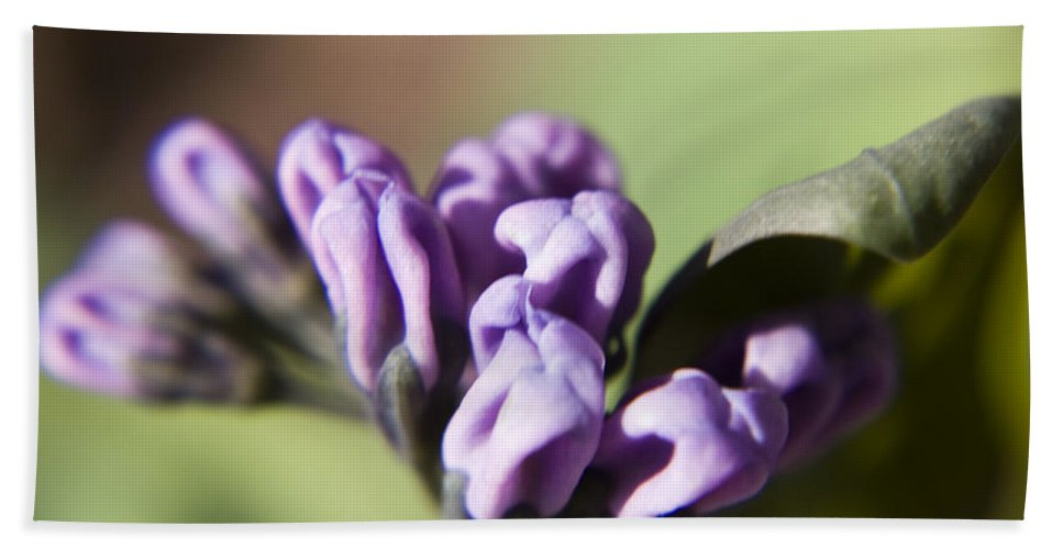 Virginia Hand Towel featuring the photograph Virginia Bluebell Buds by Teresa Mucha