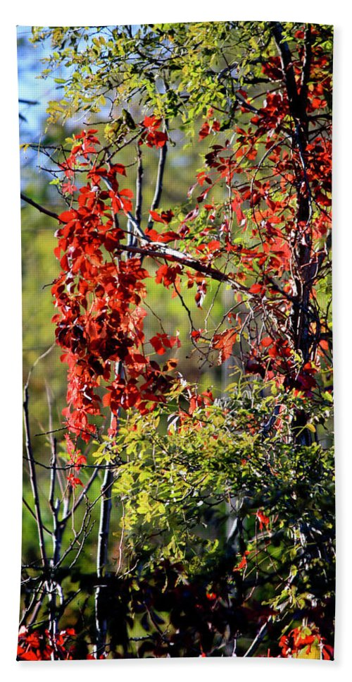 Virginia Hand Towel featuring the photograph Virginia Creeper by Teresa Mucha