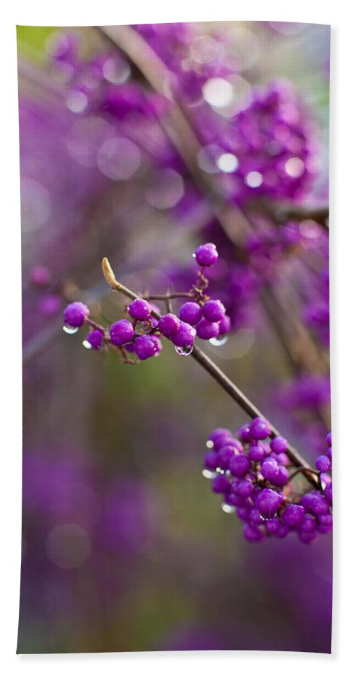 Beauty Berry Bath Sheet featuring the photograph Vivid Beauty Berries by Mike Reid