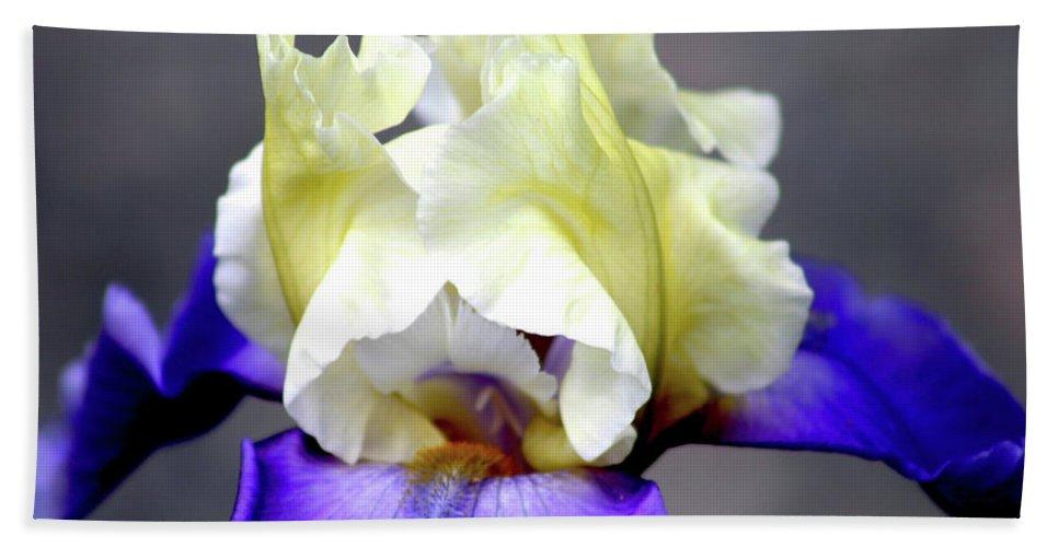 Iris Bath Sheet featuring the photograph Vivid Iris 6622 H_3 by Steven Ward