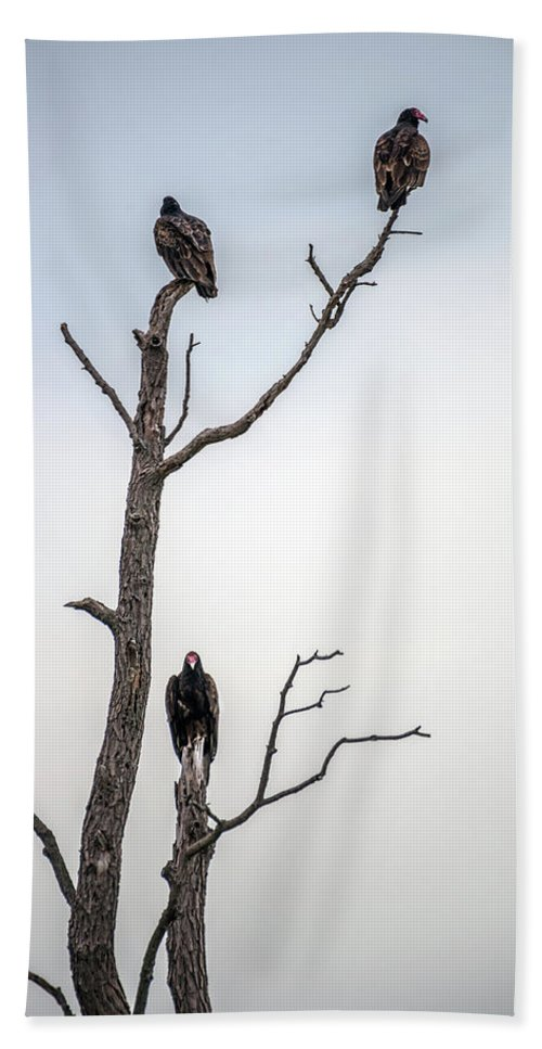 Vulture Bath Sheet featuring the photograph Vultures Perched In A Dead Tree by Patrick Wolf