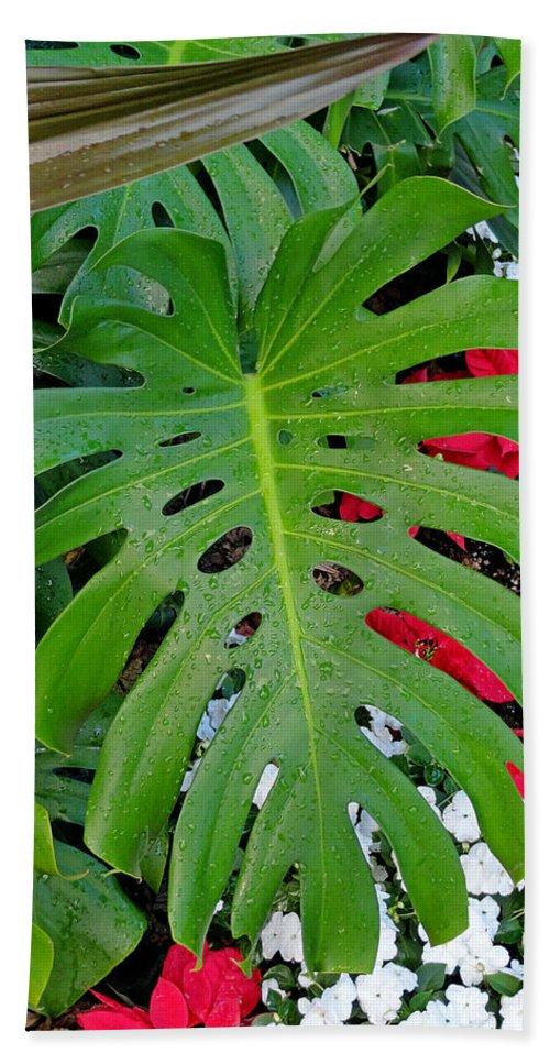 Waikiki Hand Towel featuring the photograph Waikiki Split Leaf by Robert Meyers-Lussier