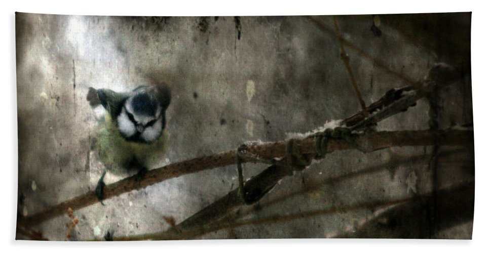 Blue Tit Bath Sheet featuring the photograph Waiting For Spring by Angel Ciesniarska