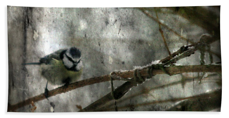 Blue Tit Bath Towel featuring the photograph Waiting For Springtime by Angel Ciesniarska