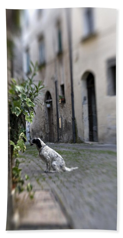 Dog Bath Towel featuring the photograph Waiting by Marilyn Hunt