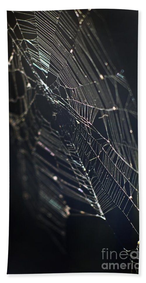 Spider Webs Hand Towel featuring the photograph Waiting... by Norman Andrus